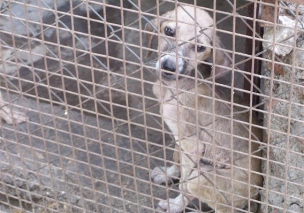 PETA India & AWBI Rescue 9 Dogs from Hell