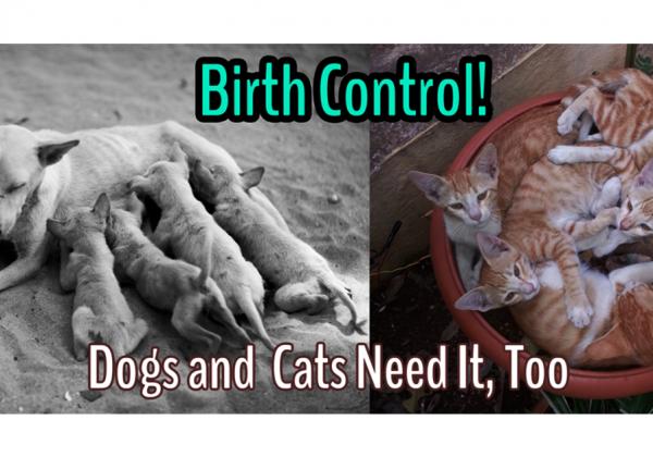 Pledge to Practice Your ABCs: Animal Birth Control