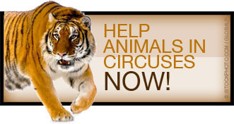 Help Animals in Circuses Now!