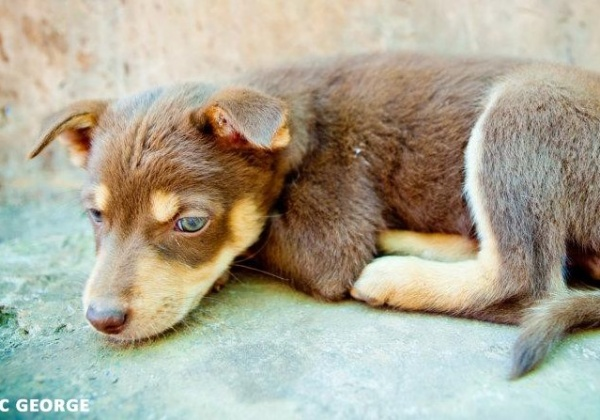 Pledge to Adopt, Never Buy or Breed Dogs