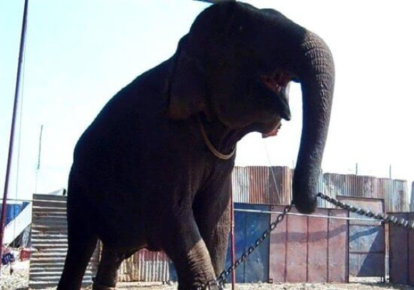 Help Ban Animals in Circuses