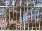 Open Gutter Runs Alongside Animal Enclosures