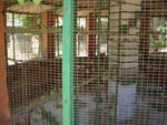 Overcrowded Bird Cage is Inadequate for Birds' Lifestyle