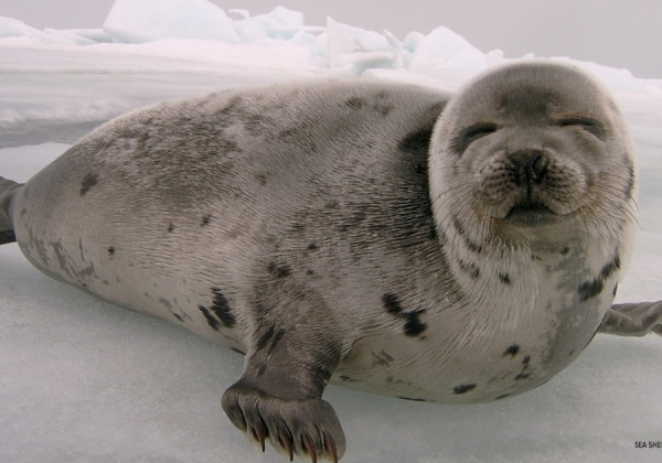 Tell Canada to End Its Shameful Seal Slaughter