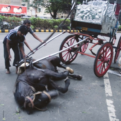 Billboard: Ban Horse Carriages