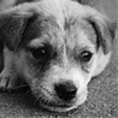 Be a Life-Saver: Adopt an Indian Animal