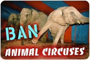 Ban Animal Circuses