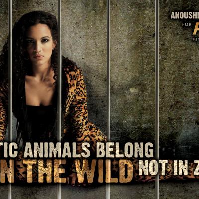 Anoushka Shankar Zoo Ad