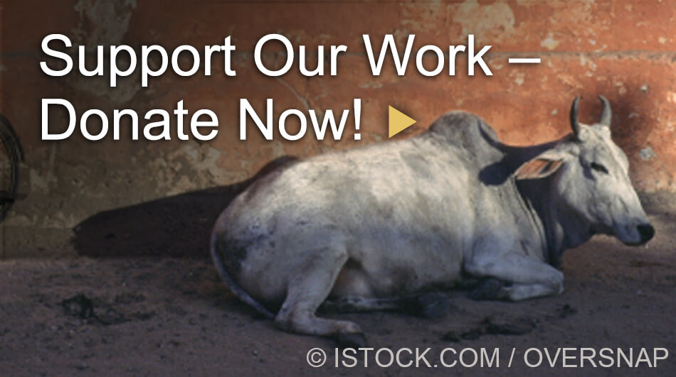 Support Our Work - Donate Now!