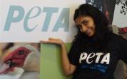 Intern or Volunteer With PETA