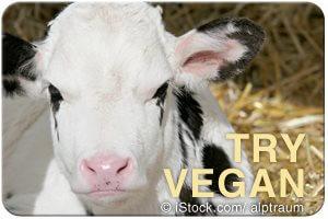 try_vegan_calf