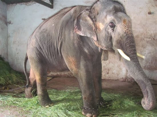 HC Orders Sunder's Release to a Sanctuary