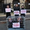 Air India: Cruelty Shouldn't Fly Activist Demonstration in France
