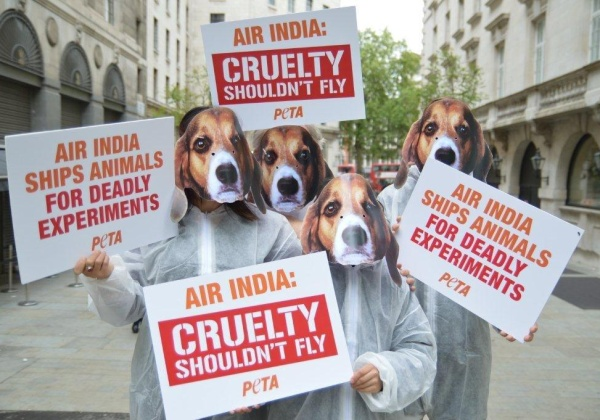 Air India: Cruelty Shouldn't Fly Activist Demonstration in the US