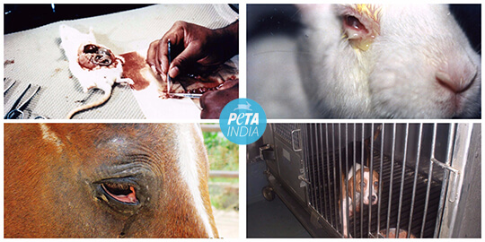 It's World Week for Animals in Laboratories