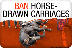 ban horse carriages