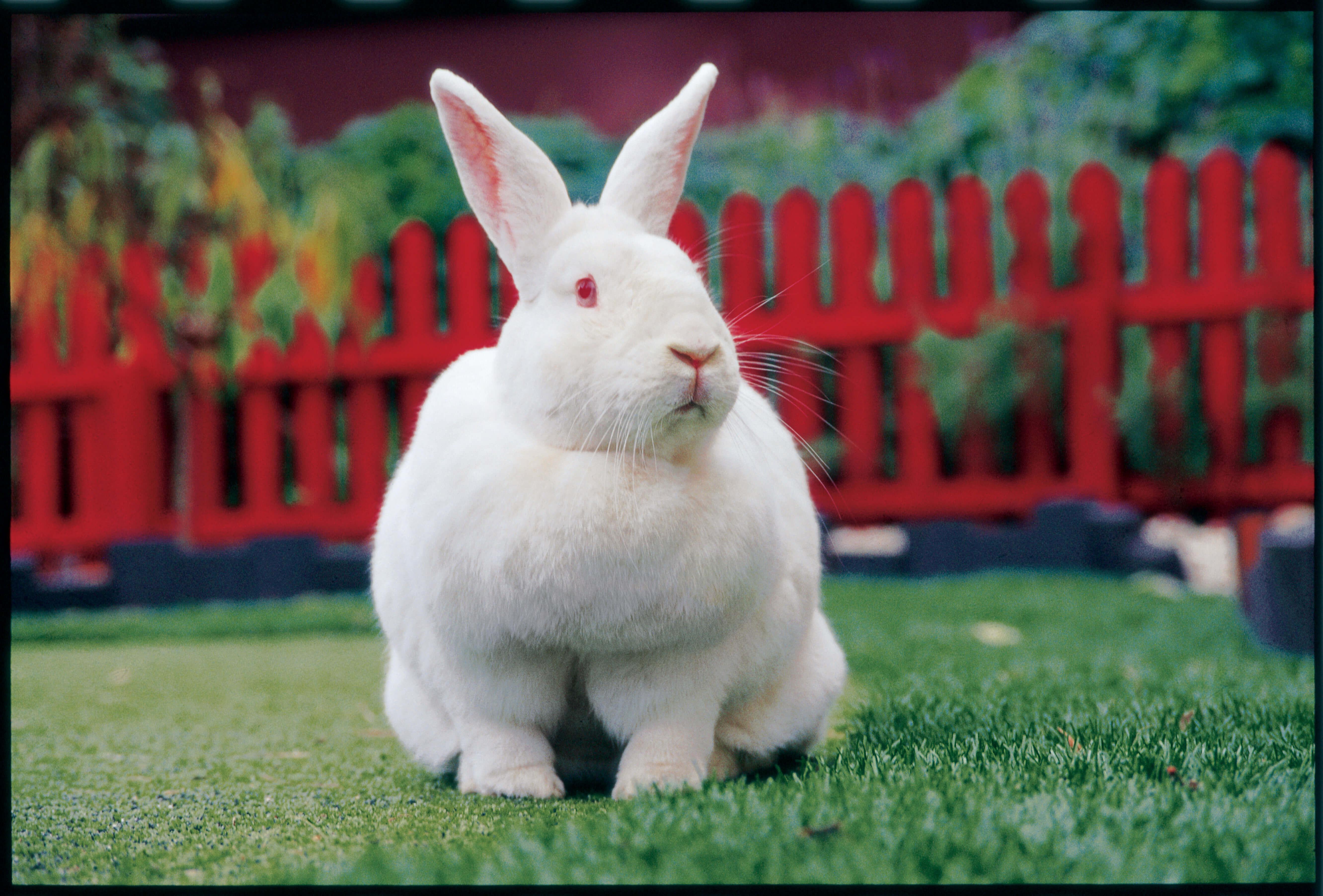 cosmetic testing ban on animals
