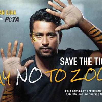 Cricketer Pragyan Ojha Says NO to Zoos