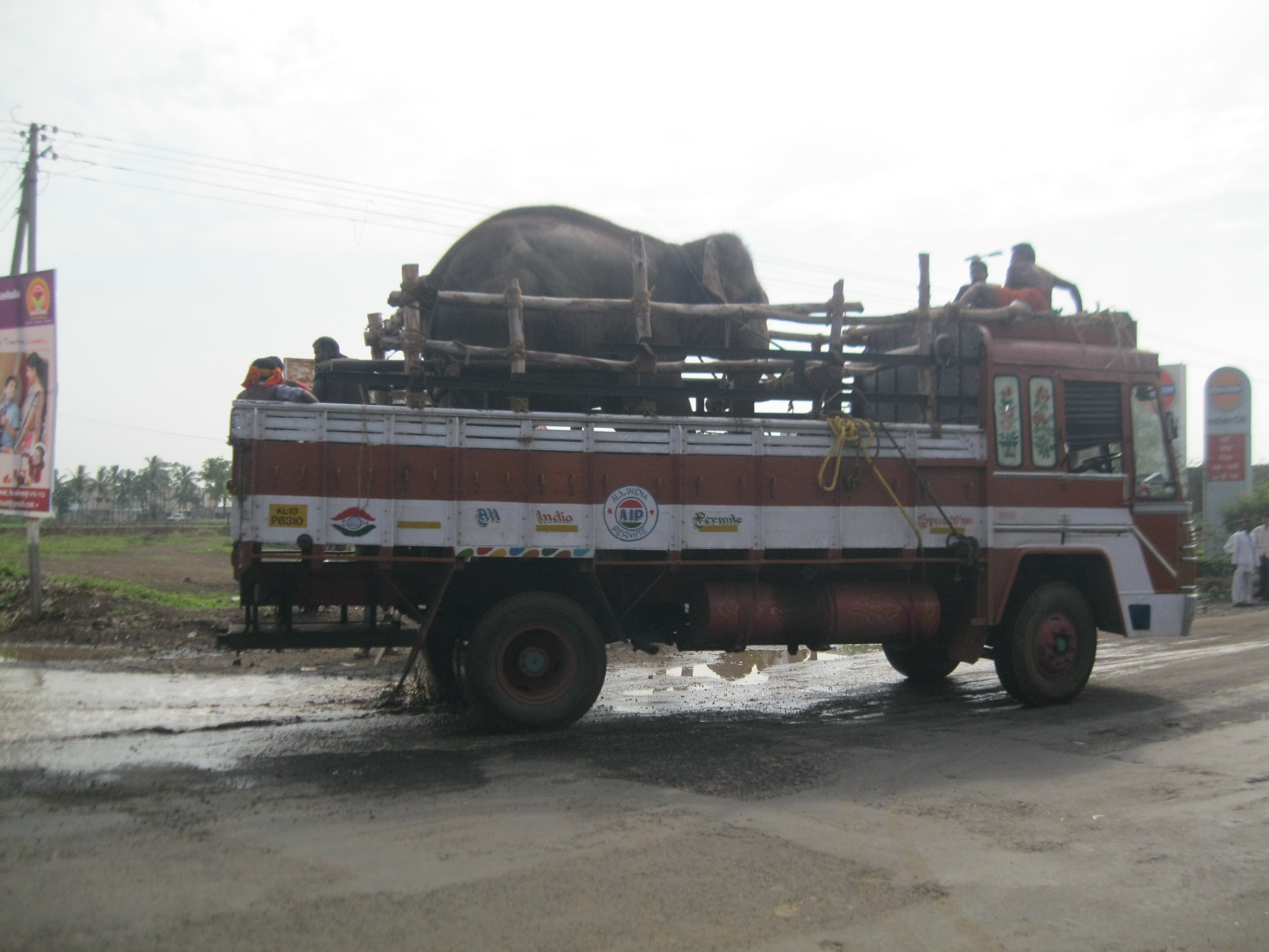 sunder the elephant on the way to his new home