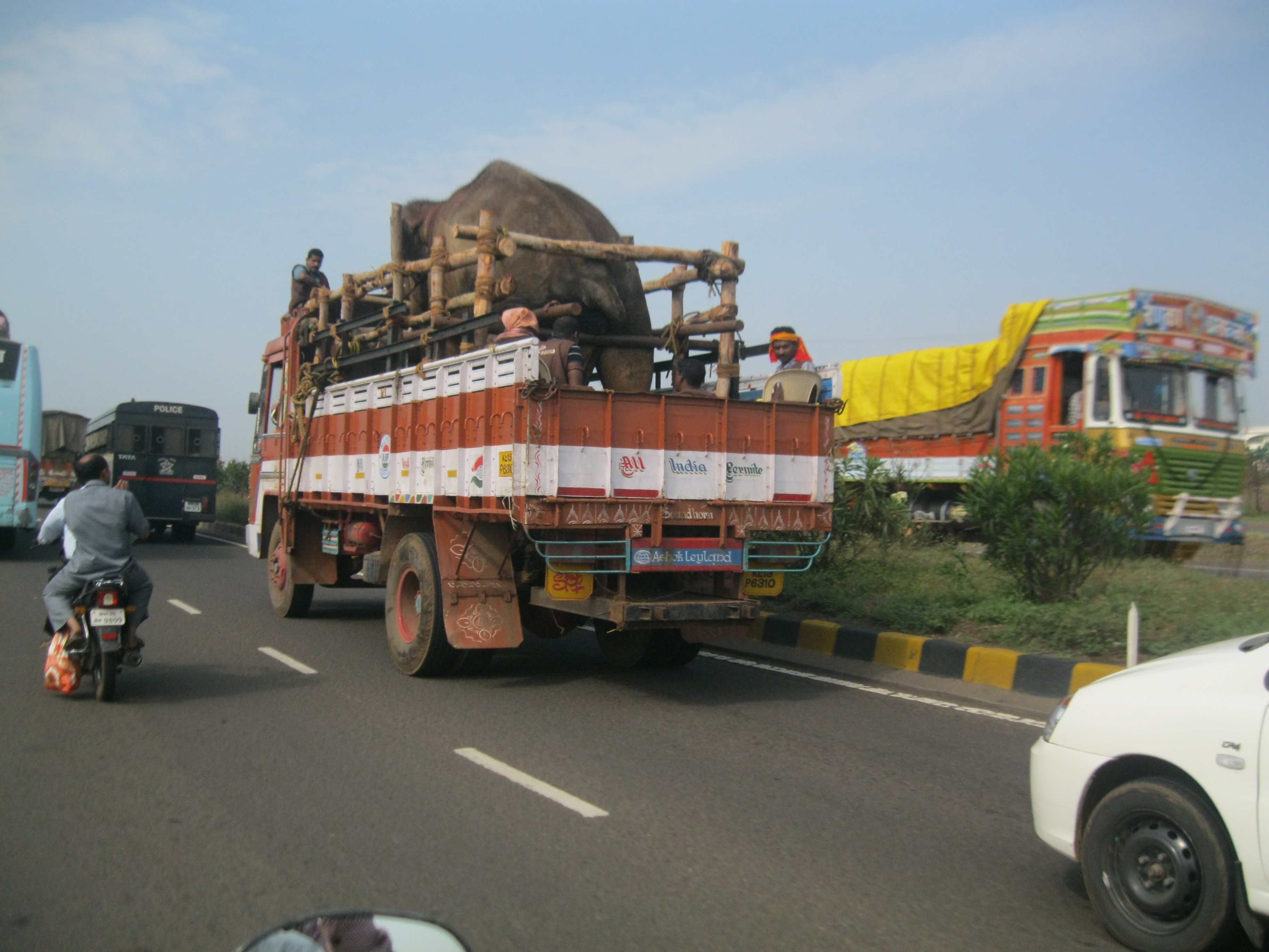 Sunder en route to new home pic 2