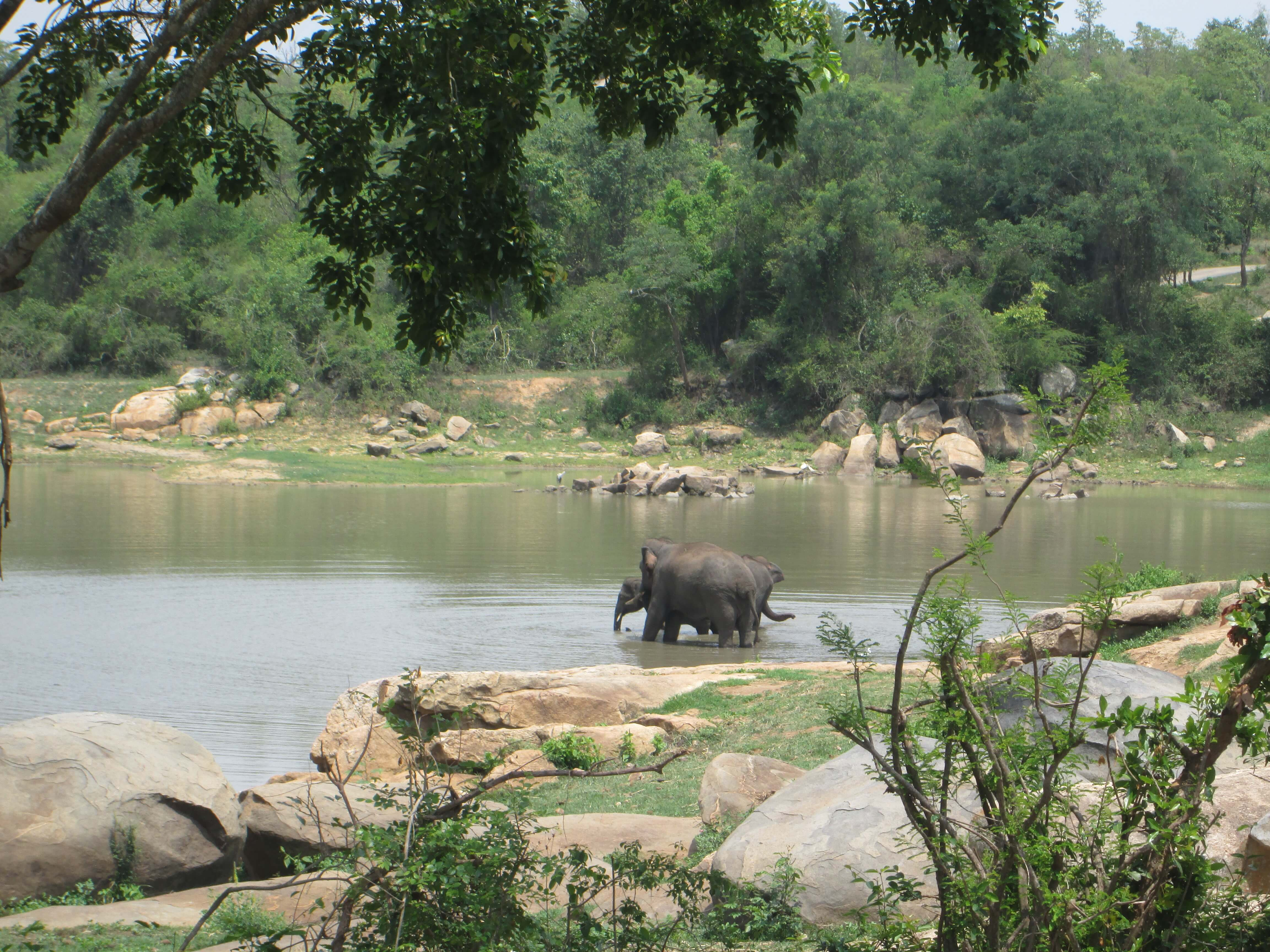 elephant-care-centre-sunder