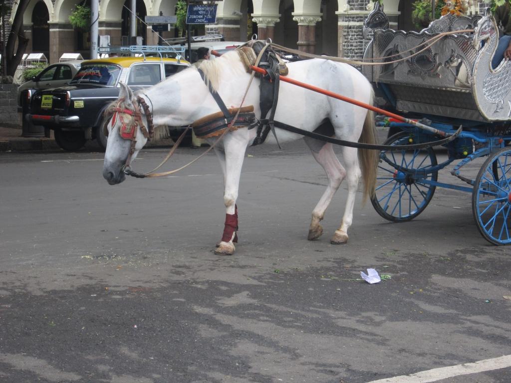 mumbai-horse-carriages