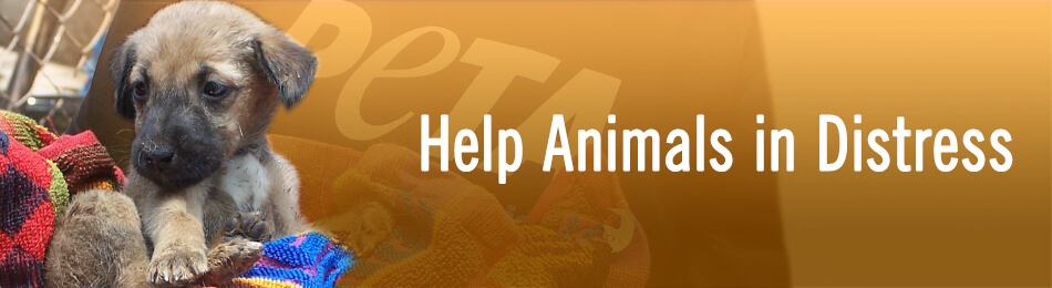 Help Animals in Distress