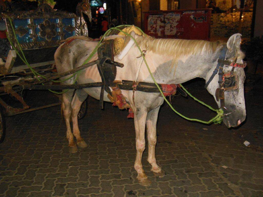 progress-horse-carriages-banned-in-colaba