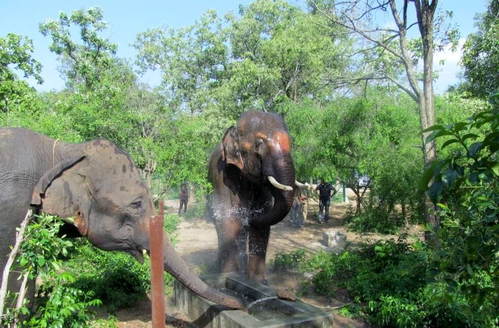 Sunder cools off with Lakshmi.