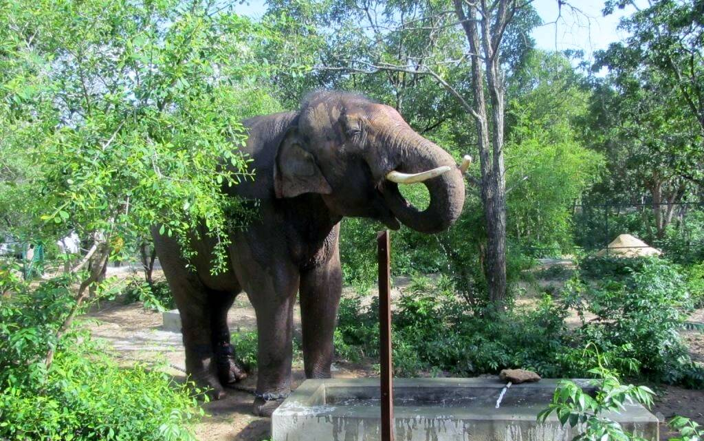 Sunder seems to think this drink of water is hitting the spot.