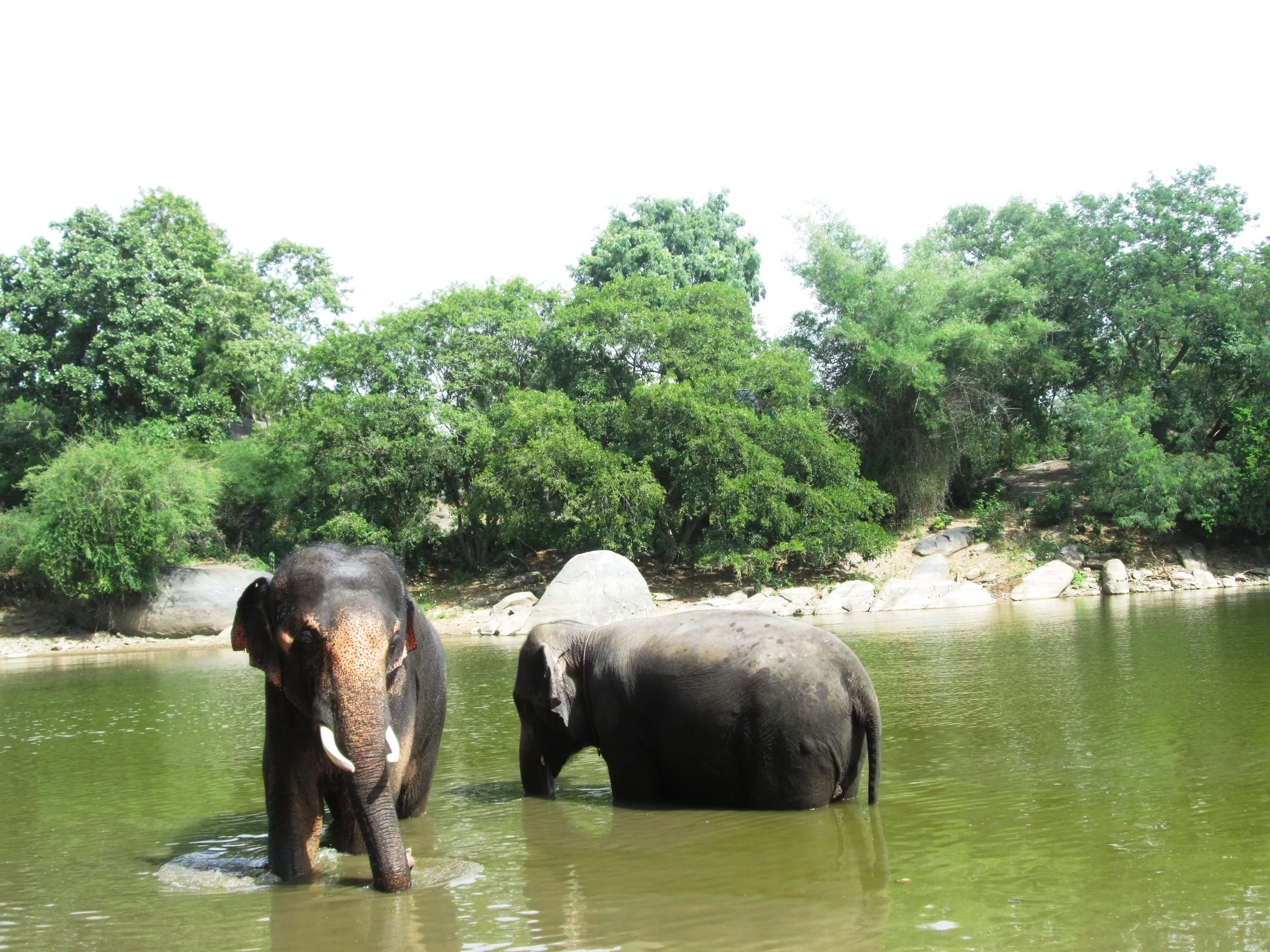 Sunder and Lakshmi are at ease in the pond and with each other.