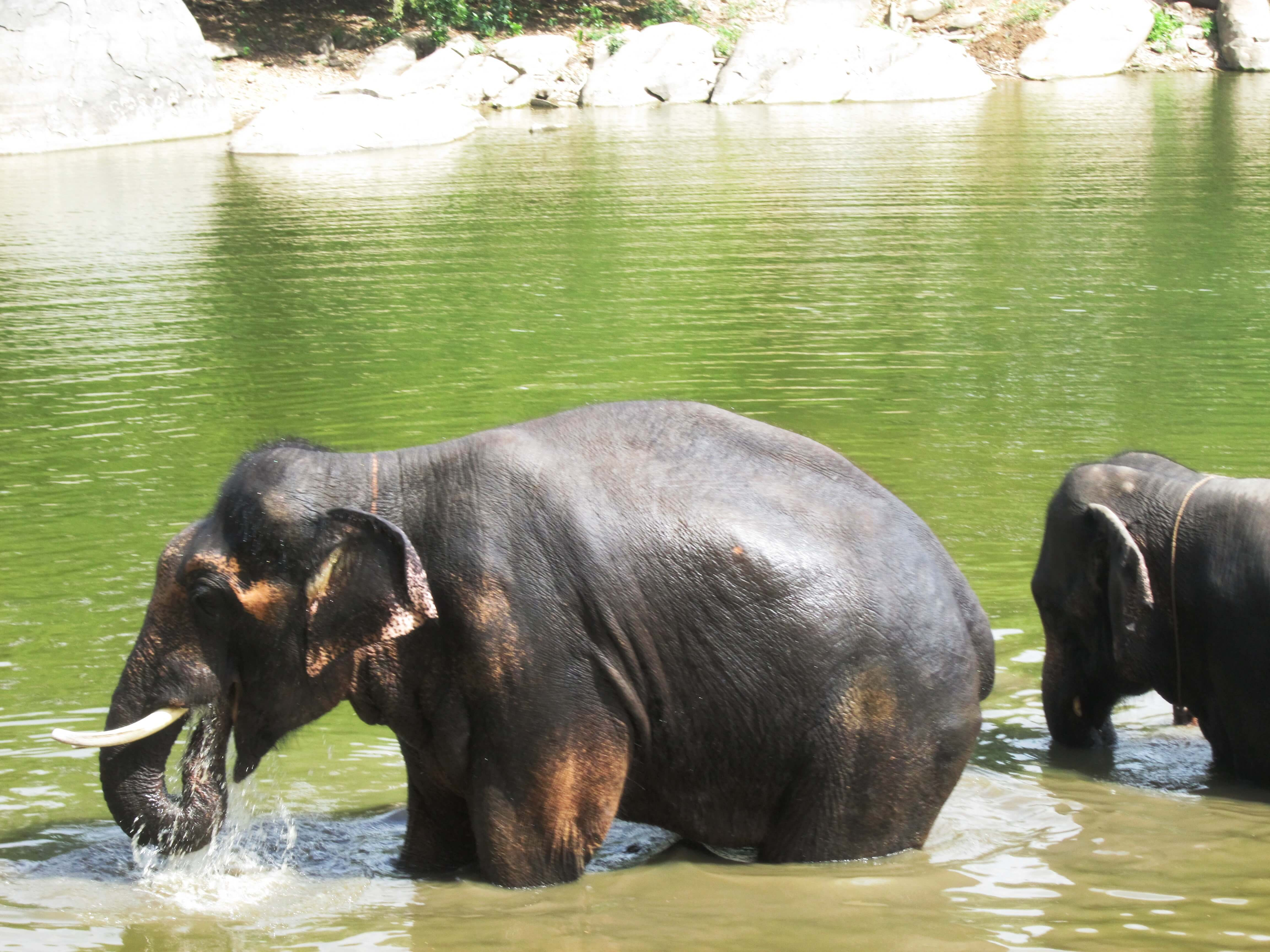 Sunder thinks this water is refreshing in more ways than one.