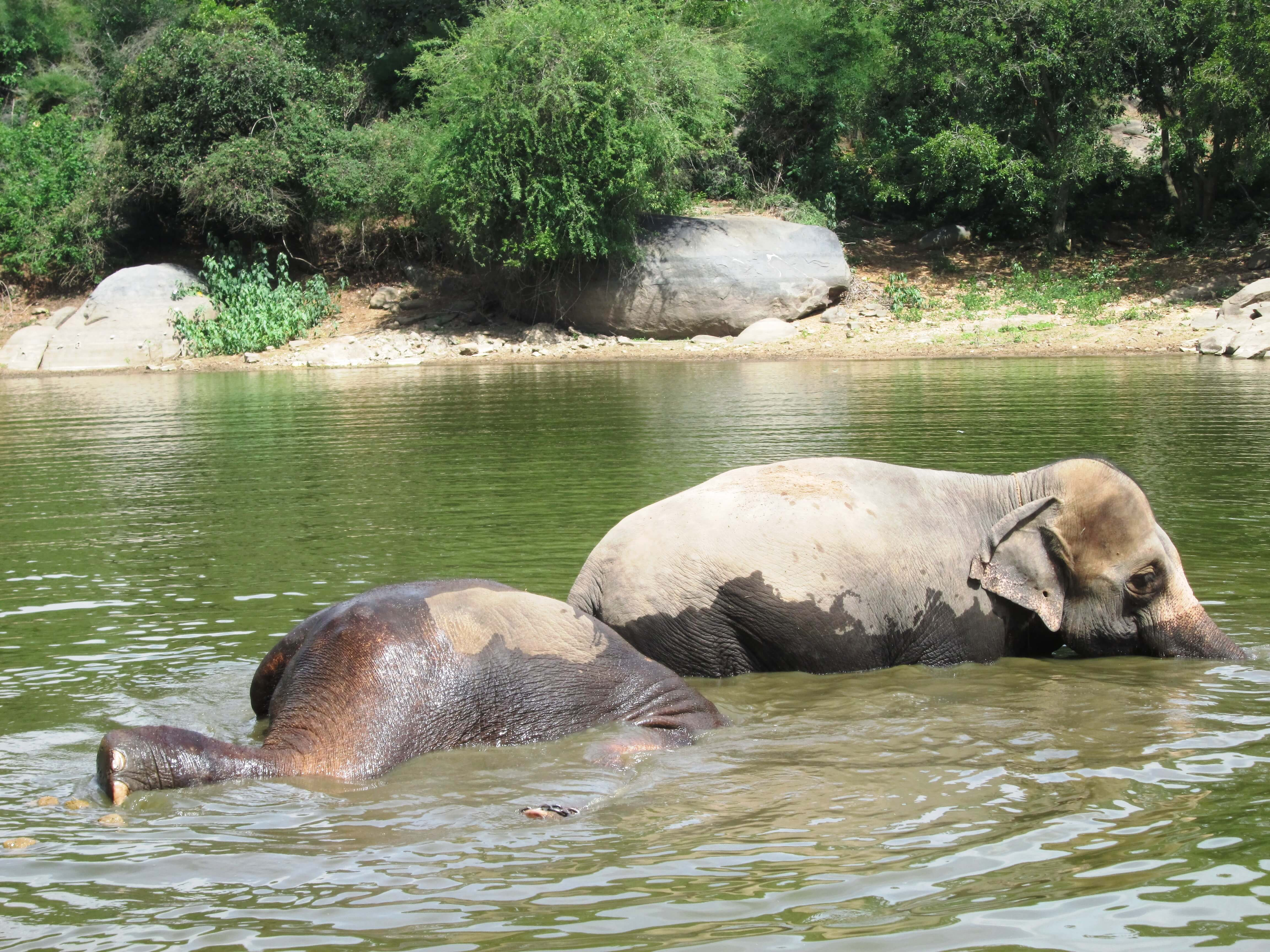 Sunder plunges right in.