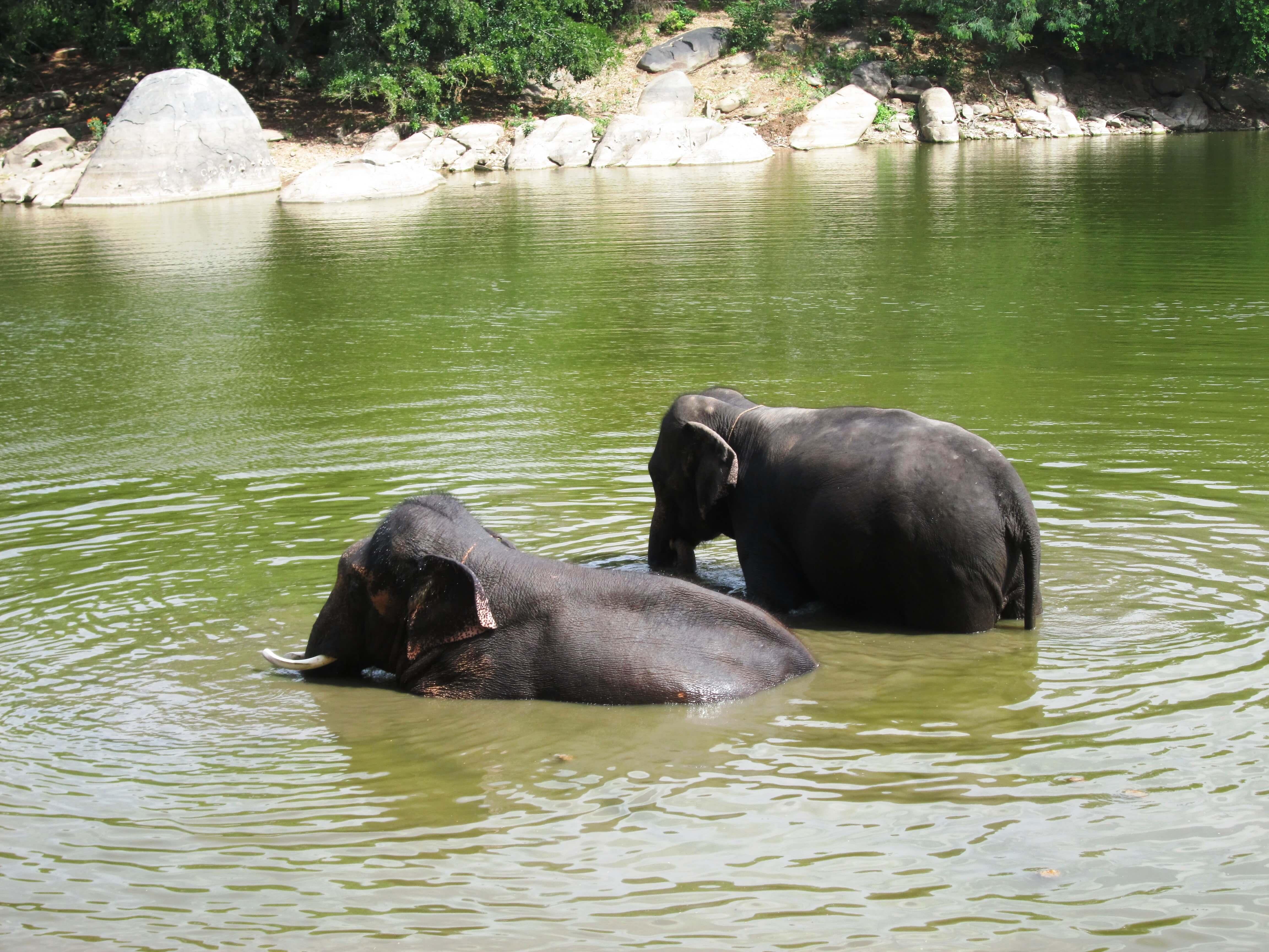 sunder-enjoying-bath- with-lakshmi_9