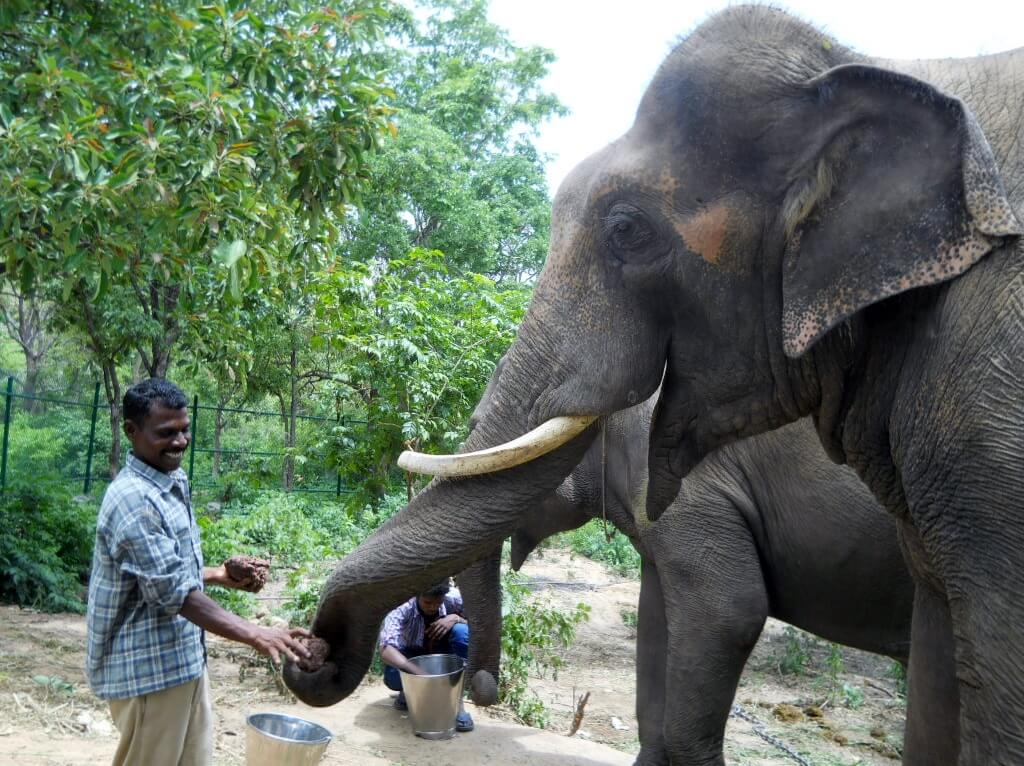 Sunder gets a coconut from a caretaker.