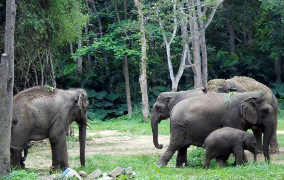 Sunder is kept close to his new family.