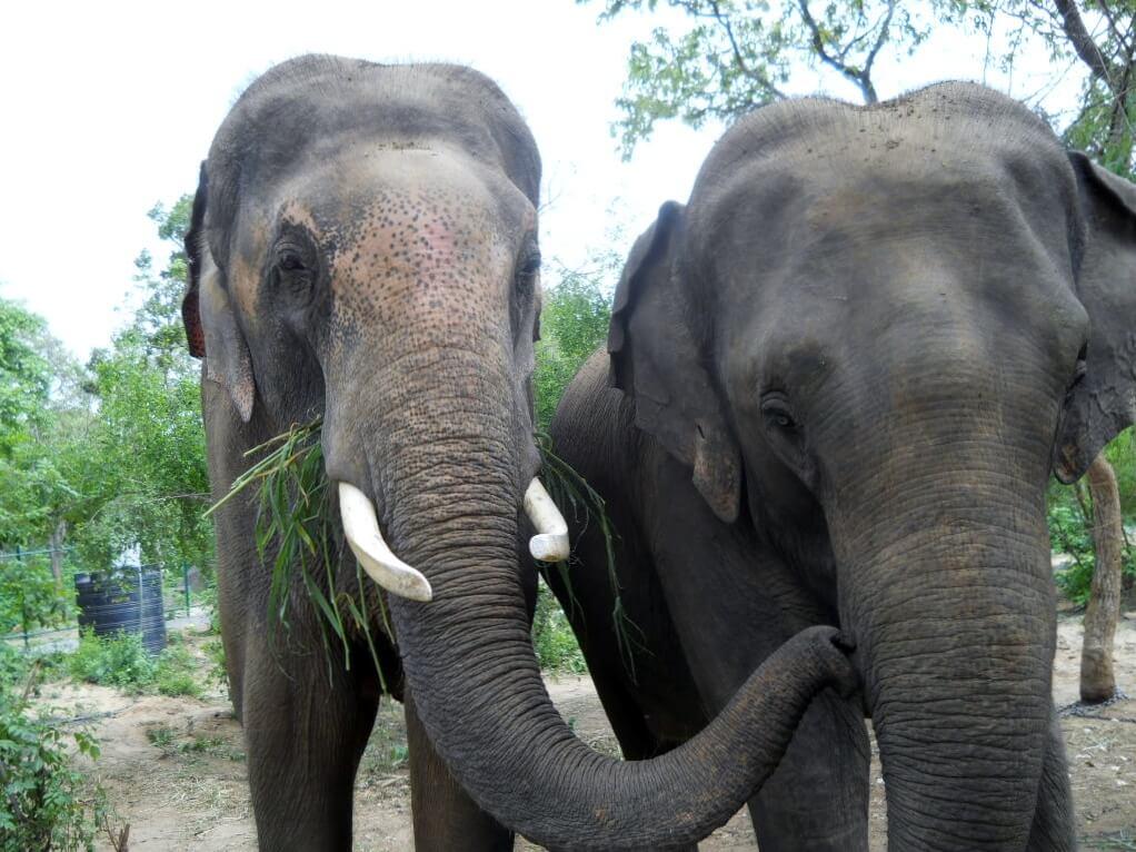 Sunder gives Lakshmi a kiss.