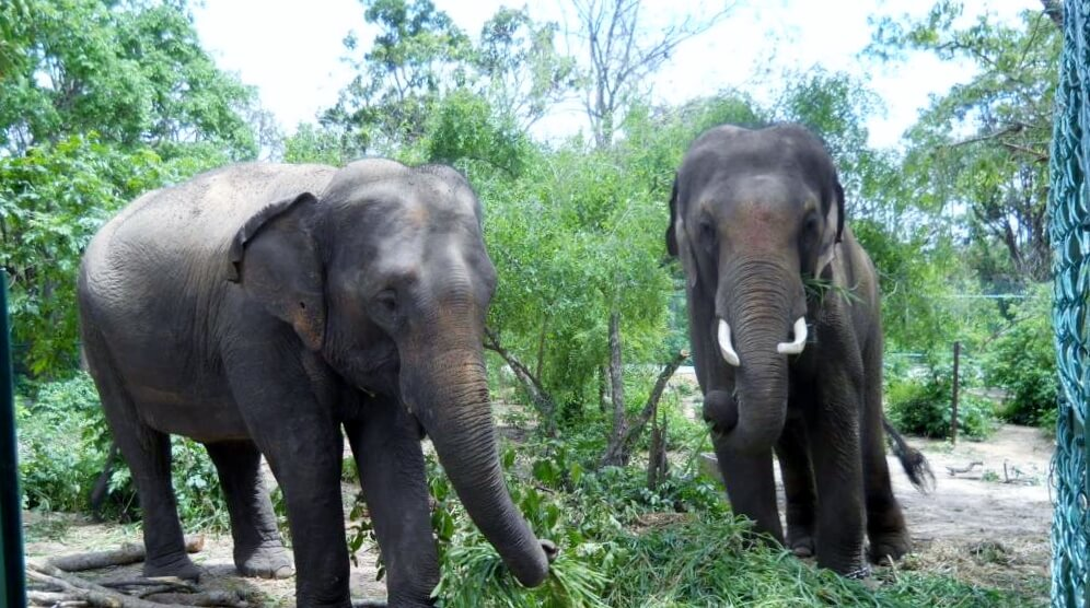 Sunder and Lakshmi have lunch.