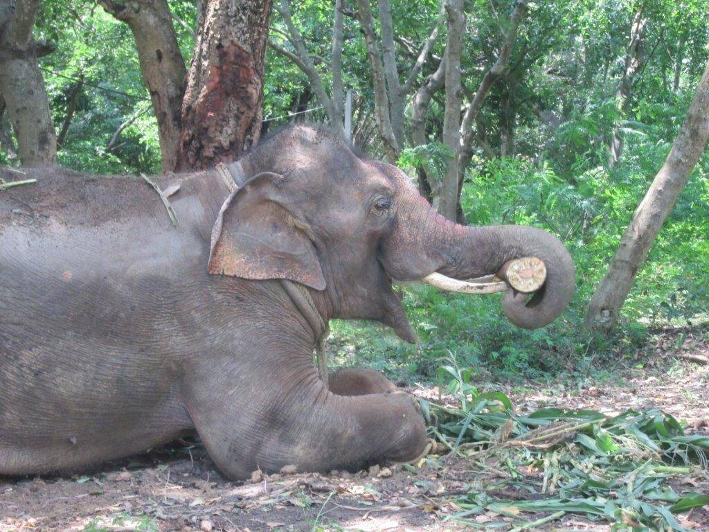 Sunder is already making himself at home at his new home