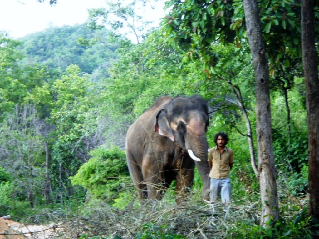Sunder takes a walk with a caretaker.