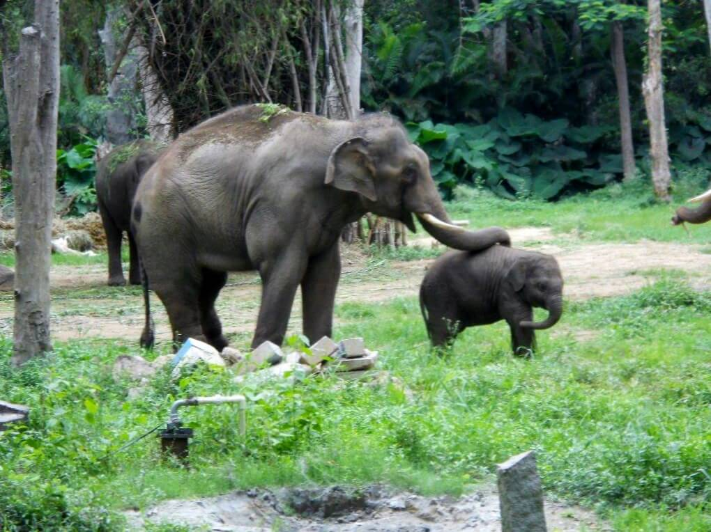 Sunder steps forward to touch baby Shiva.