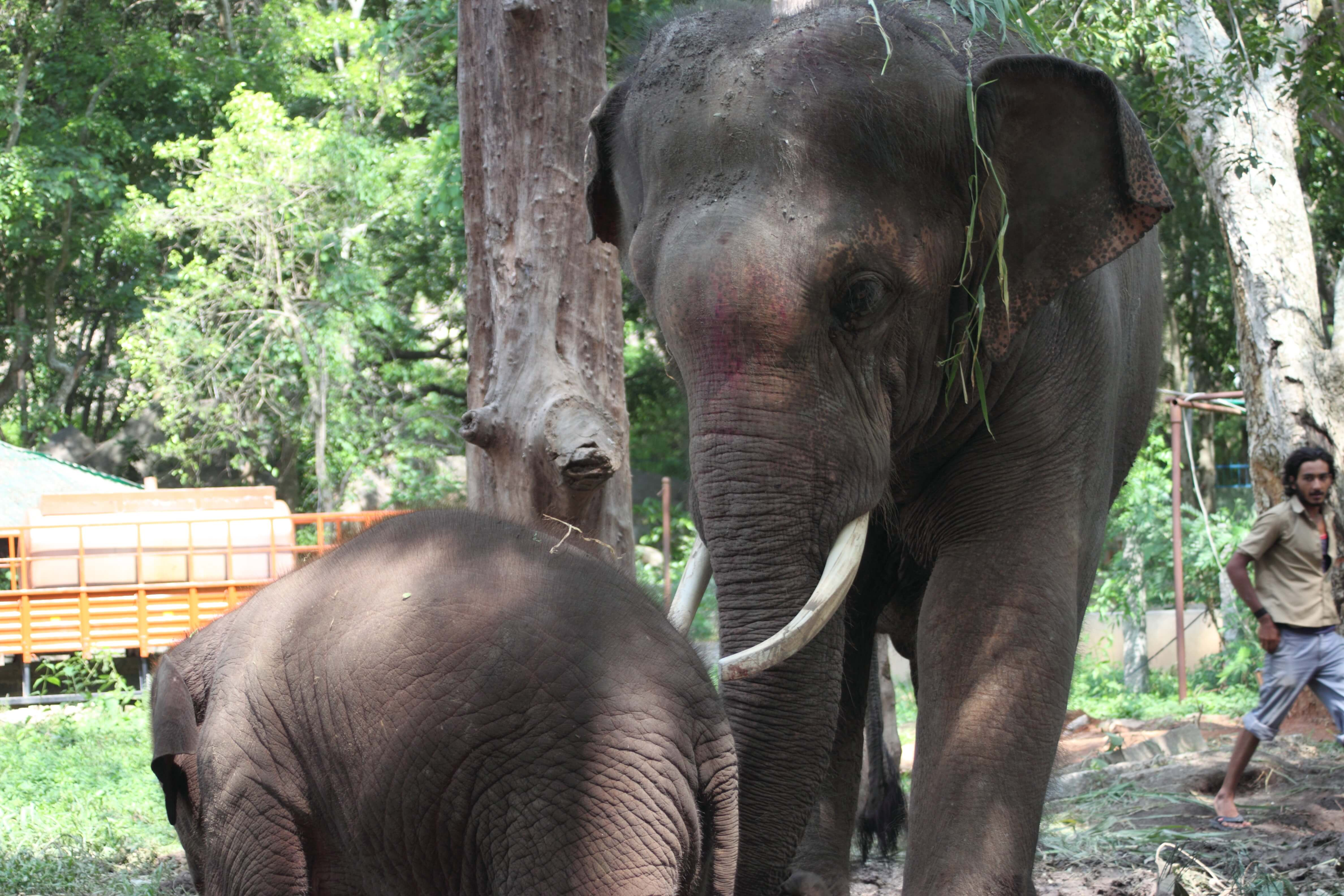 Baby Shiva is still curious about Sunder, and Sunder is becoming curious about the little one, too.
