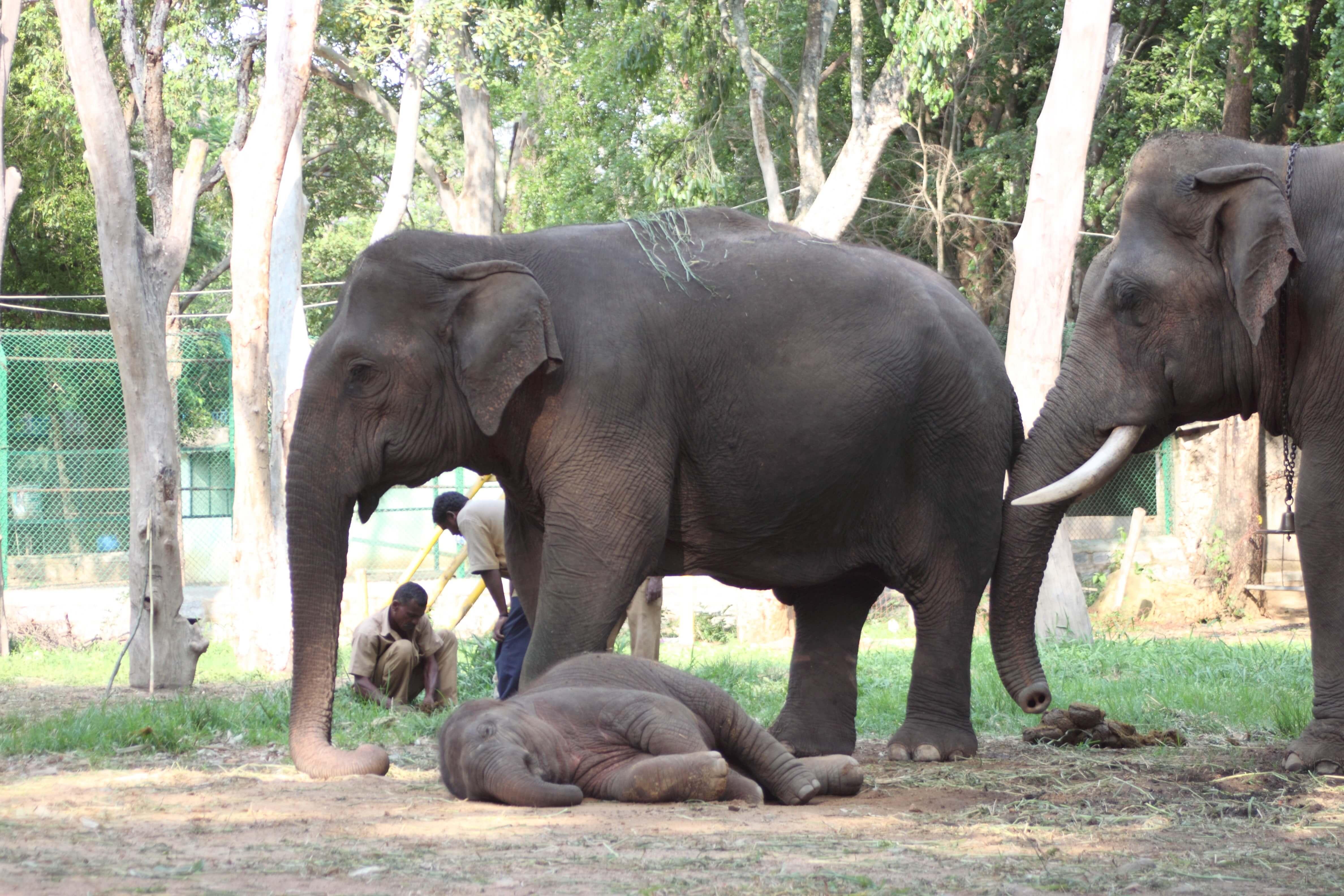 Baby Shiva takes a nap.