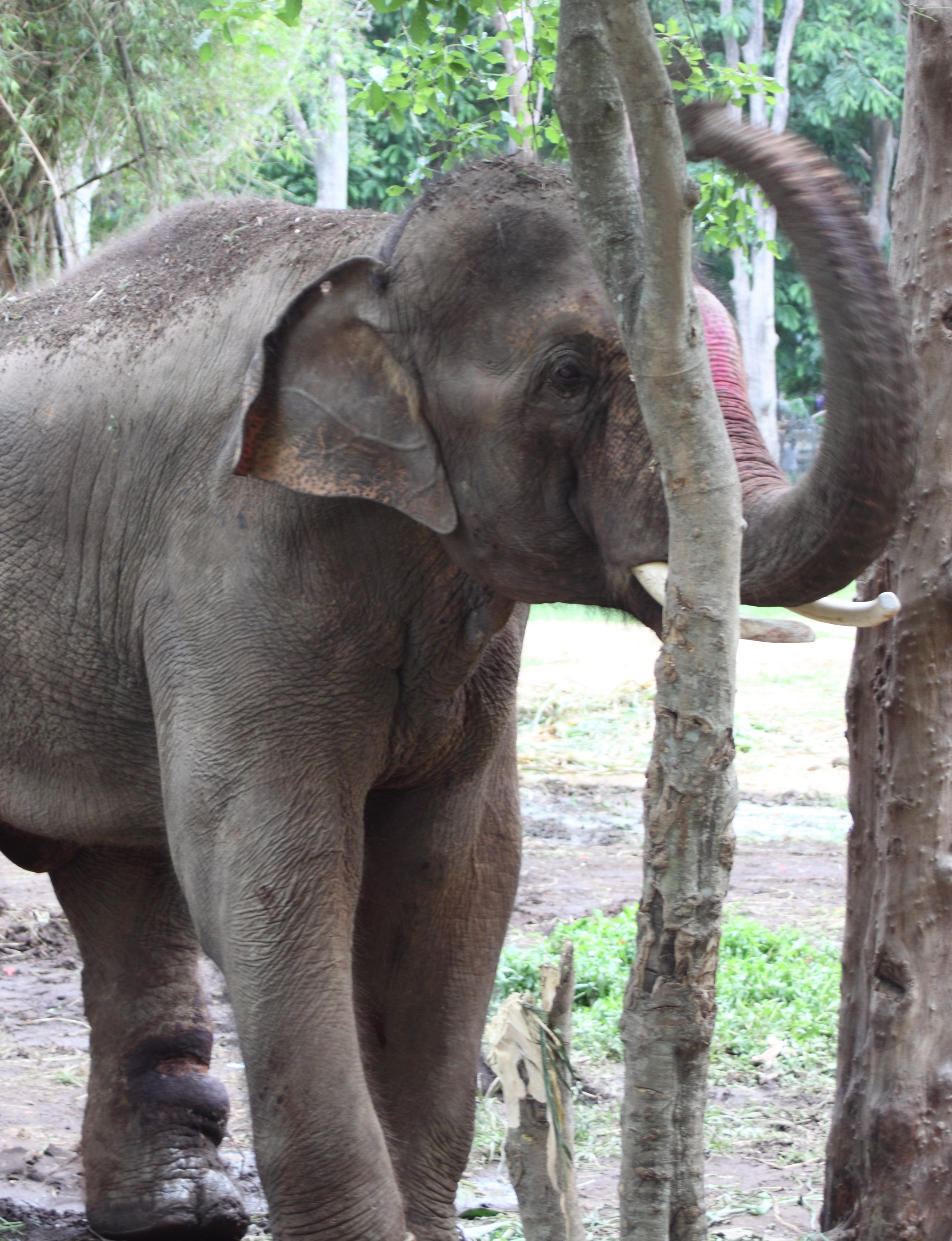 Sunder's leg is still healing from the abuse he endured. Veterinarians, however, report that he is recovering.