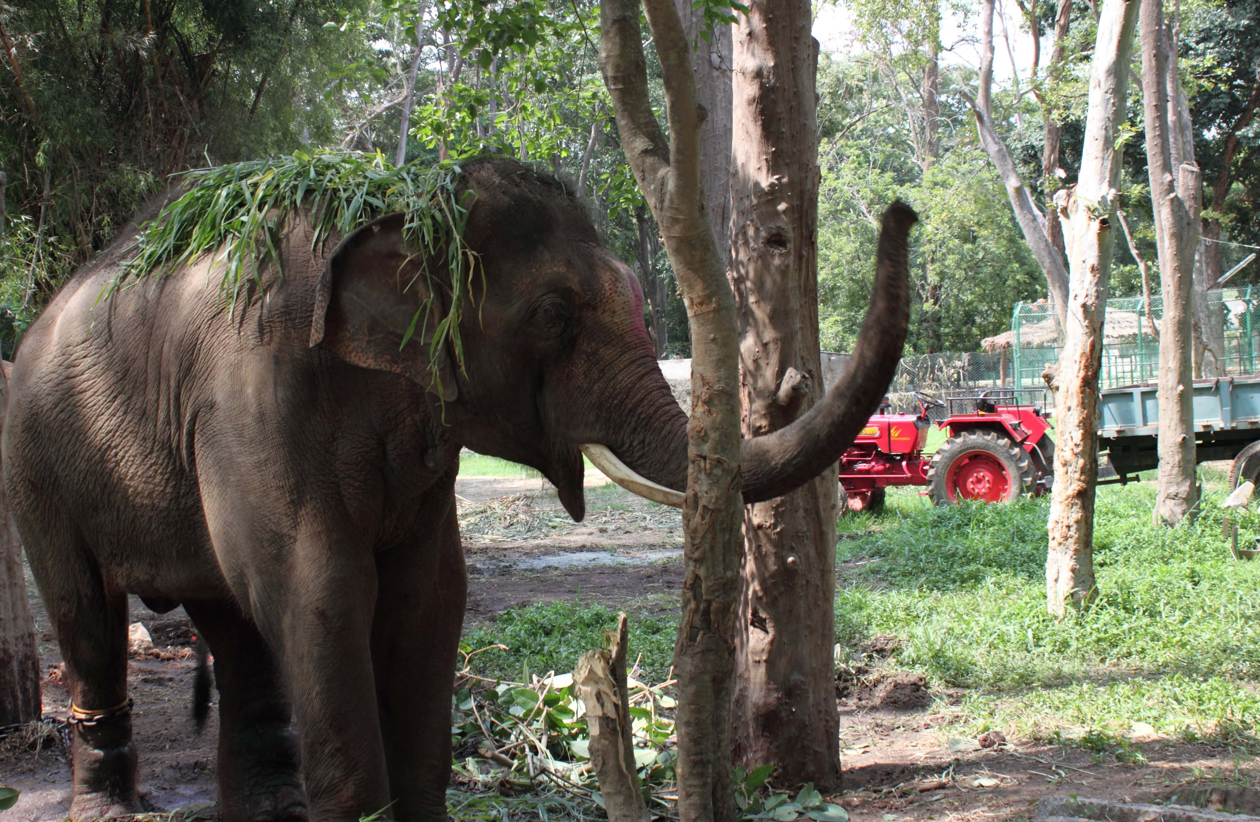 So that Sunder does not have to remain restrained during this process and while he's getting used to the park, officials there have given PETA permission to build an enclosure in which he can be treated but still walk around.