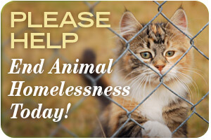 300x220-pledge-animalhomeless-cat
