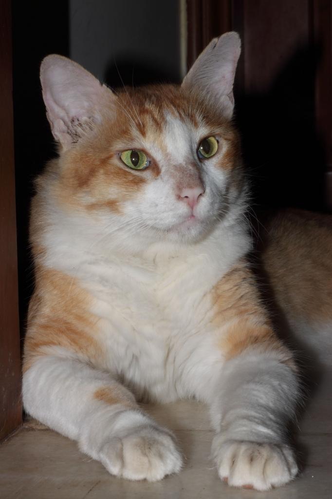 peta_rescued_cat_soya_1