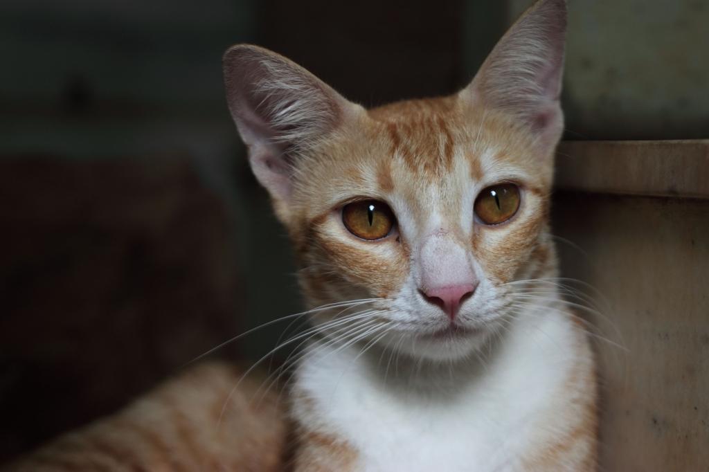 peta_rescued_cat_stripey