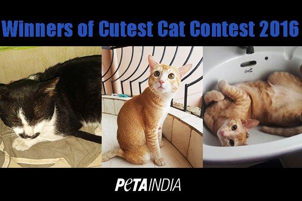 Meet PETA's 2016 'Cutest Rescued Cat Alive' Winners