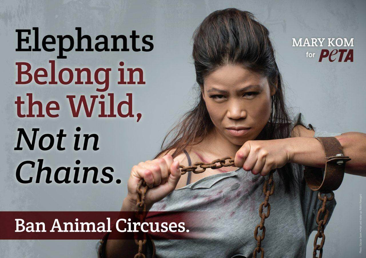 Mary Kom Knocks Out Circuses for Abusing Elephants